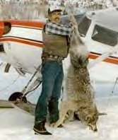 Hunter with slaughtered wolf